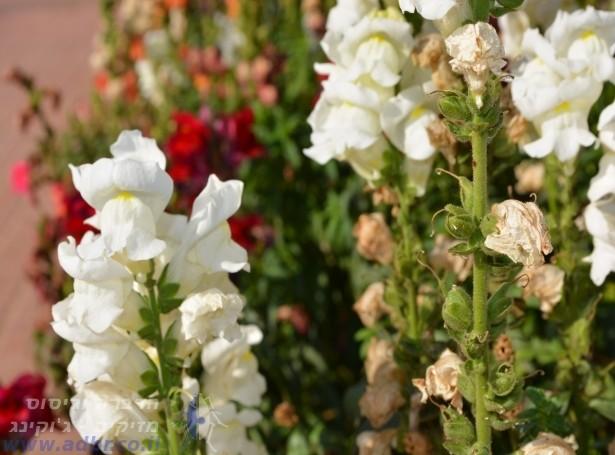 הדברה | הדברה בירושלים והסביבה