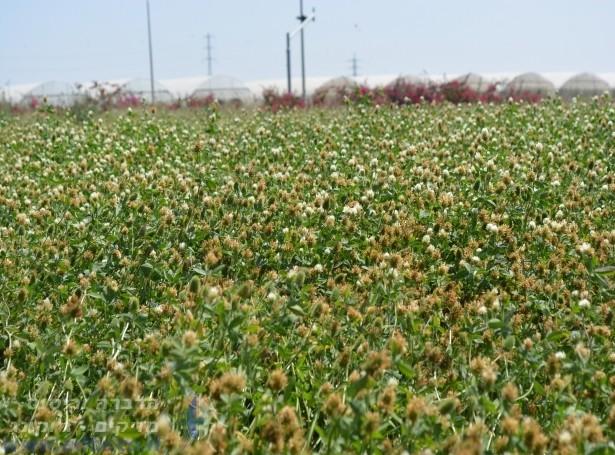 ריסוס חרקים בבת ים   ריסוס בתל אביב וגוש דן