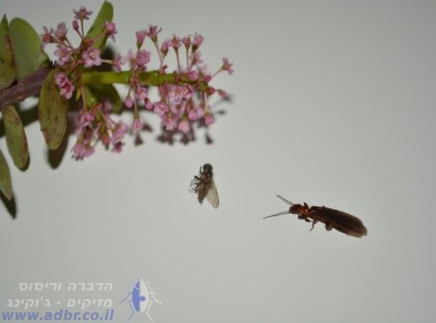 ריסוס חרקים | ריסוס באשדוד והסביבה