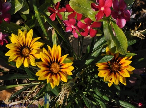 ריסוס ירוק | הדברה בחיפה והקריות