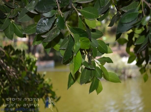 דקל | הדברה בבאר שבע והסביבה