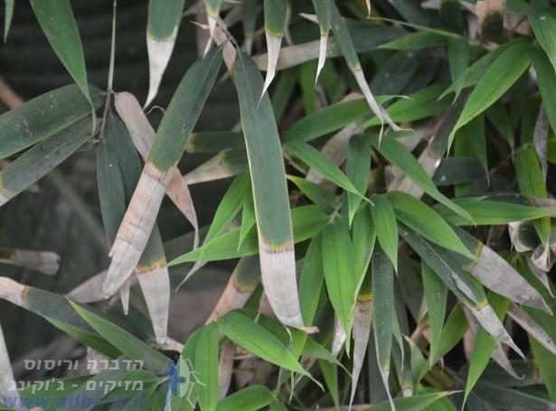 לוזית | הדברה באשדוד והסביבה